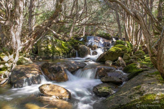 Merritts Creek off the Merritts Nature Trail at Thredbo Resort